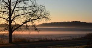 Gryningmorgon över dimmigt vinterfält Royaltyfri Fotografi