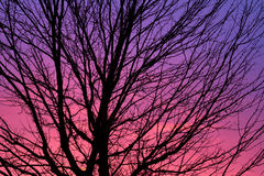 gryningsilhouettetree Arkivbild