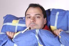 grypa Zdjęcie Royalty Free