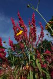 Grzebionatka ogród obrazy stock