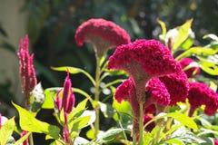 Grzebionatka w ogródzie fotografia royalty free
