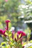Grzebionatka w ogródzie zdjęcie stock