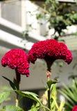 Grzebionatka w ogródzie fotografia stock