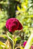 Grzebionatka w ogródzie zdjęcie royalty free
