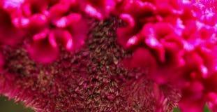 Grzebionatka w ogródzie obraz stock