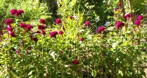 Grzebionatka w ogródzie obrazy stock