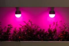 Grzejne rośliny lampami Obrazy Stock