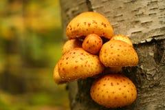 grzyb żółty Obraz Stock