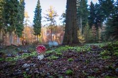 grzyb zdjęcie royalty free