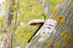 Grzyb na łamanym drzewie zdjęcia stock