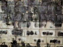 Grzyb na ścianie obraz royalty free