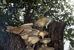 Grzyb na bagażniku drzewo obrazy royalty free