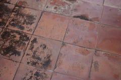 Grzyb na dachówkowej podłoga na zewnątrz budynku fotografia stock