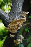 Grzyb na drzewach Zdjęcia Stock