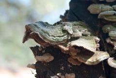 Grzyb na drzewie obraz stock