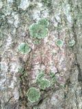 Grzyb na korowatym drzewie zdjęcia royalty free