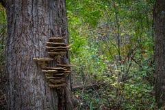 Grzyb w drzewie Zdjęcie Royalty Free