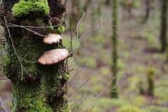 Grzyb w lesie obrazy stock