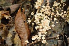 Grzyb wiązki pieczarkowy dorośnięcie od gnicia loguje się ziemię w lesie zdjęcie royalty free