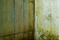 grzyba deszcz ściana Obrazy Stock