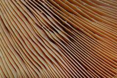 grzybek obraz stock