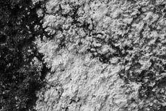Grzybowa betonowej ściany tła tekstura obraz stock