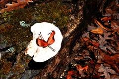 grzybowy biel obrazy stock
