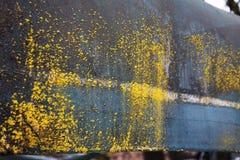 Grzybowy dorośnięcie na starym dachu obrazy stock