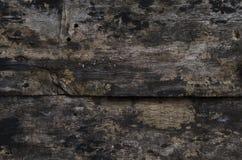 grzybowy grunge ściany drewno Obrazy Stock