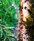Grzyby na drzewie w lesie obraz stock