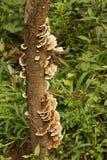 Grzyby r na drewnie, przeciw zielonemu tłu Zdjęcia Royalty Free
