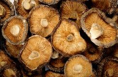 grzyby shiitake suszone Obrazy Stock