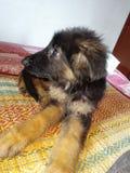 Adorable pet stock photography