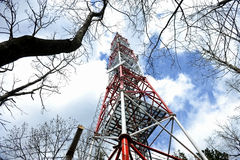 Gsm antenna into the woods Royalty Free Stock Photos