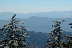 gsmnp冰冷的杉木 免版税库存照片