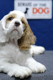 Guárdese de perro Imágenes de archivo libres de regalías
