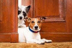 Guárdese de perros Imagen de archivo libre de regalías