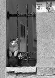 Guárdese del perro Fotos de archivo