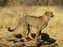 Animaux africains du sud Photographie stock libre de droits