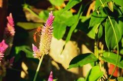 guêpe Photo libre de droits
