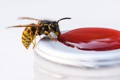 Guêpe mangeant de la confiture rouge Image stock