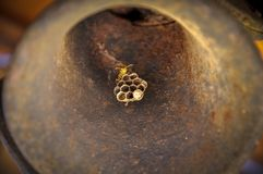 Guêpes à l'intérieur d'une cloche photos stock