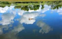 Água azul e pato selvagem Fotos de Stock