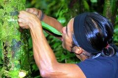Guía del Amazonas Imagen de archivo libre de regalías