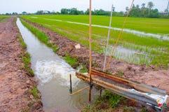 Água para o campo do arroz. Imagens de Stock Royalty Free