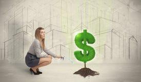 Água poring da mulher de negócio no sinal da árvore do dólar no backgrou da cidade Foto de Stock