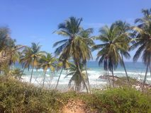 Guacuco Playa Стоковое Изображение RF