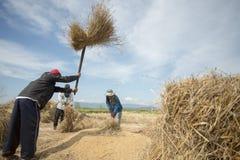 GUADAGNI DI RISAIA DI AGRICOLTURA DELLA TAILANDIA CHIANG RAI Fotografie Stock Libere da Diritti