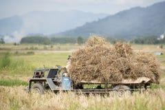 GUADAGNI DI RISAIA DI AGRICOLTURA DELLA TAILANDIA CHIANG RAI Fotografia Stock