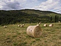 Guadalajara Meadow. One of the typical meadows of Guadalajara, Spain Royalty Free Stock Image